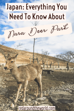 One of the best things to do in Japan is a day trip from Kyoto to Nara Deer Park. It's fun for people of all ages and the perfect way to spend an afternoon. Japan travel | Japan vacation | Japan things to do | Kyoto vacation | Kyoto things to do | Kyoto Japan | Kyoto travel | Kyoto day trips | Nara Japan | Nara deer park | Japan deer park