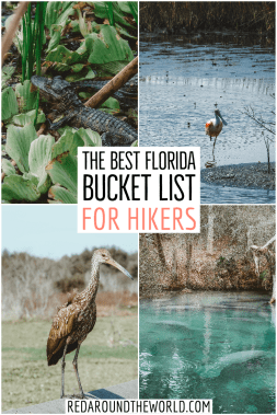 This is the best Florida bucket list for outdoor lovers. You'll find some of the best Florida State Parks and lesser-known outdoor areas in Florida. Florida bucket list | florida hikes | hiking in florida | florida vacation | florida road trip | florida things to do | florida hiking | bucket list for florida | best things to do in Florida | florida places to go | beaches in florida | shelling in FloridaThis is the best Florida bucket list for outdoor lovers. You'll find some of the best Florida State Parks and lesser-known outdoor areas in Florida. Florida bucket list | florida hikes | hiking in florida | florida vacation | florida road trip | florida things to do | florida hiking | bucket list for florida | best things to do in Florida | florida places to go | beaches in florida | shelling in Florida