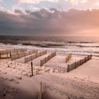 Cape San Blas Shelling: Everything You Need To Know