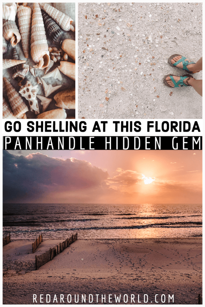 Cape San Blas shelling is a must-do on any visit to the Florida panhandle. Relax on the beach, enjoy the bay, visit the state park, and do some shelling. shelling in Florida | best beaches in Florida | Florida beaches | Florida road trip | Florida panhandle | Florida travel | Florida vacation | Florida things to do | Florida state parks | shelling beaches Florida | cape san blas shelling | cape san blas florida