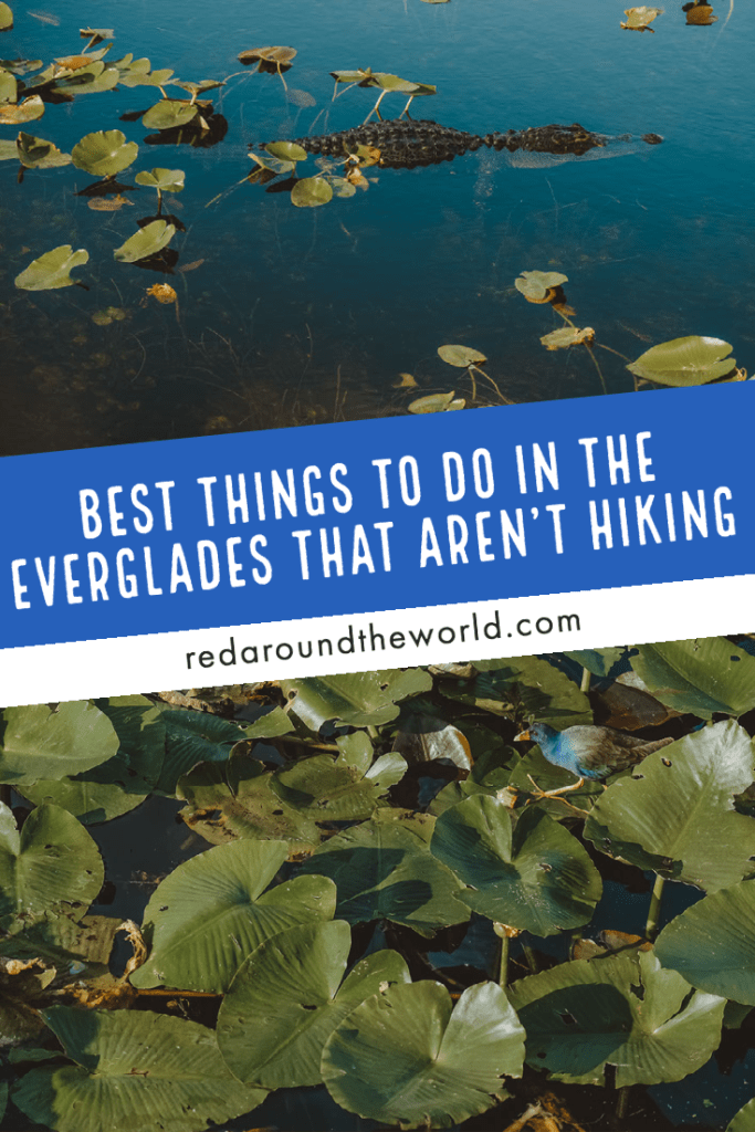 There are so many amazing things to do in Everglades National Park that aren't hiking. They could keep you busy for months and will help make your trip the best it can be. everglades things to do | everglades biking | everglades boat tours | everglades kayaking | things to do in the everglades | Florida road trip | Florida national parks | everglades national park | south Florida things to do | Florida vacation | Florida things to do
