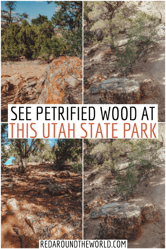 Visit the Escalante Petrified Forest State Park on your Utah road trip. It's one of the best things to do in Escalante. See petrified wood of all colors. Utah things to do | petrified wood | utah road trip | utah vacation | utah travel ideas | utah state parks | escalante utah | escalante things to do | escalante utah things to do | escalante utah vacation