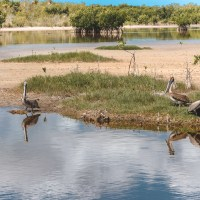 Birding Paradise In Florida: Hike The Marsh Trail In Ten Thousand Islands