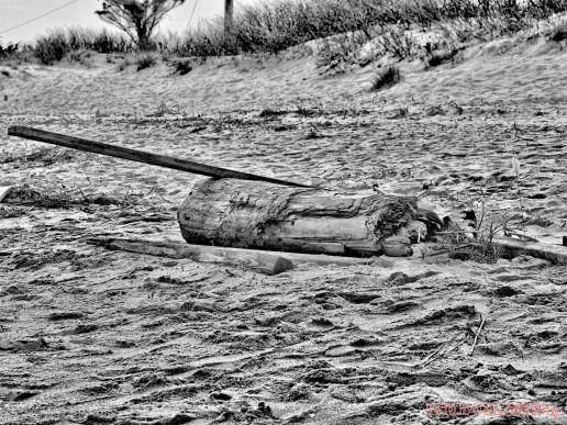Clean Ocean Action Beach Sweeps 2 11 of 20