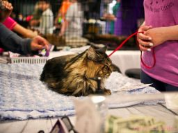 Super Pet Expo April 2018 104 of 117
