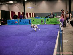 Super Pet Expo April 2018 20 of 117