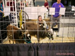 Super Pet Expo April 2018 81 of 117