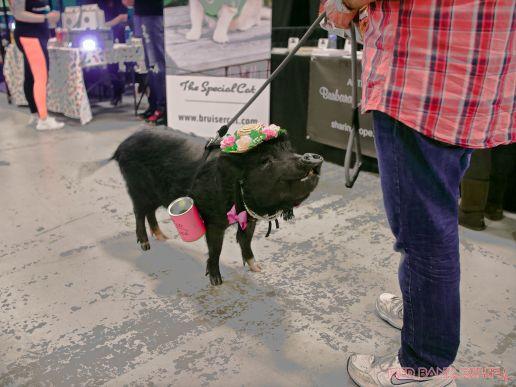 Super Pet Expo April 2018 96 of 117