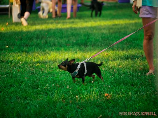 Red Bank Dog Days August 2018 24 of 51