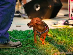 Red Bank Dog Days August 2018 3 of 51