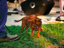 Red Bank Dog Days August 2018 4 of 51