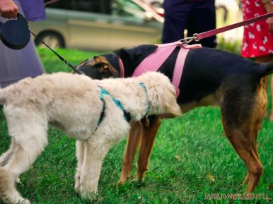 Red Bank Dog Days August 2018 48 of 51