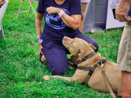 Red Bank Dog Days August 2018 50 of 51