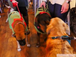 Home Free Animal Rescue with Santa Paws at Bradley Brew Project 16 of 53