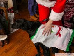 Home Free Animal Rescue with Santa Paws at Bradley Brew Project 31 of 53