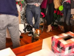 Home Free Animal Rescue with Santa Paws at Bradley Brew Project 36 of 53