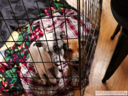 Home Free Animal Rescue with Santa Paws at Bradley Brew Project 37 of 53