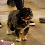 monmouth county spca wine & wag at grape beginnings winery 7 of 67