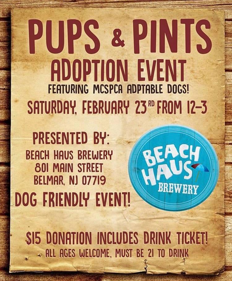 Pups & Pints Adoption Event MCSPCA Beach Haus Brewery