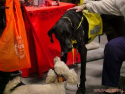 Super Pet Expo 2019 Day 2 71 of 96