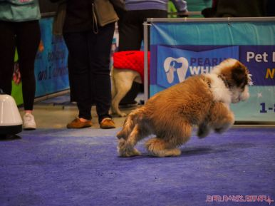 Super Pet Expo 2019 Day 2 74 of 96