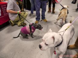 Super Pet Expo 2019 Day 2 91 of 96