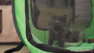 Catsbury Park Cat Convention 2019 154 of 183