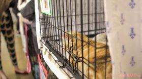 Catsbury Park Cat Convention 2019 166 of 183