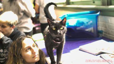 Catsbury Park Cat Convention 2019 168 of 183