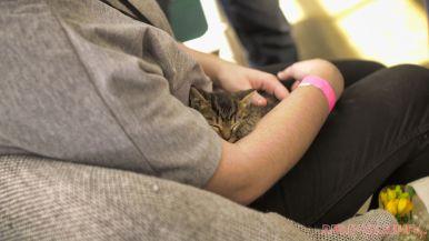 Catsbury Park Cat Convention 2019 169 of 183