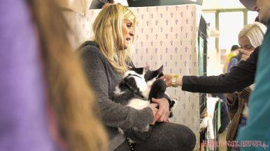 Catsbury Park Cat Convention 2019 170 of 183