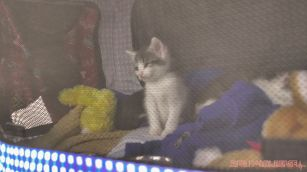 Catsbury Park Cat Convention 2019 171 of 183
