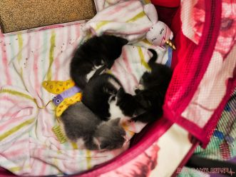 Catsbury Park Cat Convention 2019 28 of 183