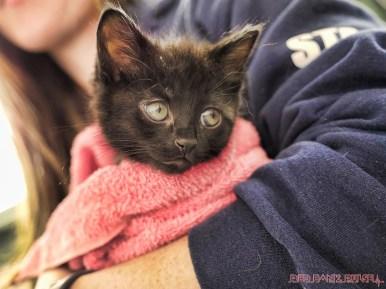 Catsbury Park Cat Convention 2019 29 of 183