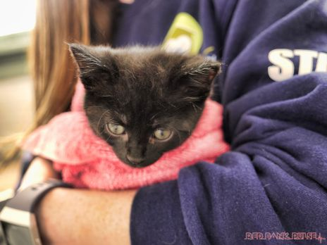 Catsbury Park Cat Convention 2019 31 of 183