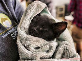 Catsbury Park Cat Convention 2019 34 of 183
