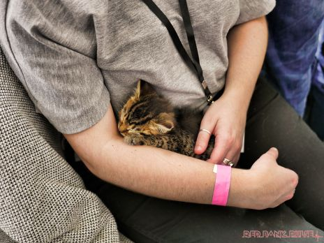 Catsbury Park Cat Convention 2019 41 of 183