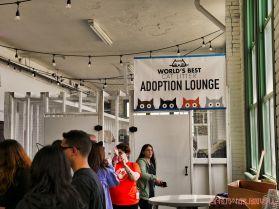 Catsbury Park Cat Convention 2019 43 of 183