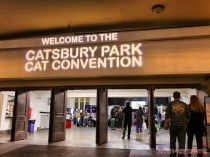 Catsbury Park Cat Convention 2019 50 of 183