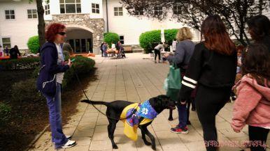 Monmouth County SPCA dog walk & pet fair 2019 2 of 95