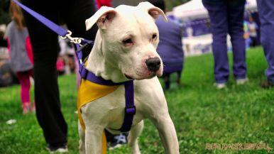 Monmouth County SPCA dog walk & pet fair 2019 28 of 95