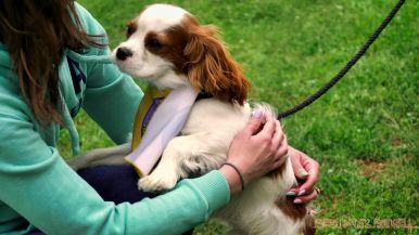 Monmouth County SPCA dog walk & pet fair 2019 30 of 95