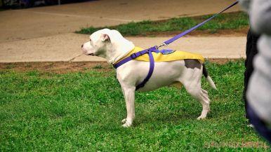 Monmouth County SPCA dog walk & pet fair 2019 31 of 95