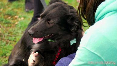 Monmouth County SPCA dog walk & pet fair 2019 38 of 95