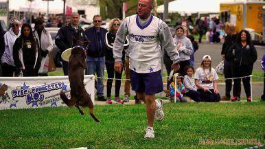Monmouth County SPCA dog walk & pet fair 2019 43 of 95