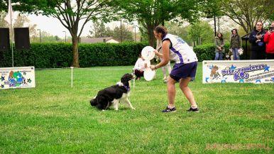 Monmouth County SPCA dog walk & pet fair 2019 58 of 95