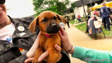 Monmouth County SPCA dog walk & pet fair 2019 61 of 95
