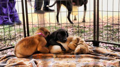 Monmouth County SPCA dog walk & pet fair 2019 63 of 95