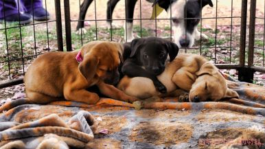 Monmouth County SPCA dog walk & pet fair 2019 64 of 95