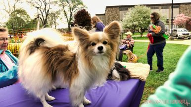 Monmouth County SPCA dog walk & pet fair 2019 70 of 95